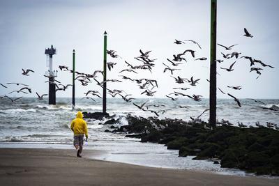 Deauville (Francia ).- Un pescador camina en la playa asustando a una bandada de aves marinas en Deauville, Francia. EFE