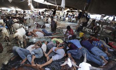 """NUEVA DELHI (INDIA).- Comerciantes duermen junto a sus cabras en un mercado situado frente a la mezquita Jama Masjid, durante la festividad musulmana de Eid Al Adha en Nueva Delhi, India. Millones de musulmanes de todas las partes del mundo se preparan estos días para la festividad del Eid Al Aldha o """"fiesta del sacrificio"""", donde se rememora la historia del profeta Abraham, quien mató a un cordero en lugar de a su propio hijo Ismael, según relata el Corán. EFE"""