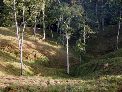 RÍO SAN JUAN (NICARAGUA).- Fotografía  que muestra una vista del bosque en la reserva Indio Maíz, a orillas del río San Juan, frontera natural con Costa Rica. La reserva biológica Indio Maíz, es una de las áreas de bosque tropical húmedo más importante de Centroamérica que en los últimos años ha estado bajo el acecho e invasión de colonos. EFE