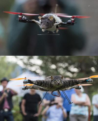 Berna (Suiza ).- Las imágenes muestran una rata volar 'Ratatouille' y un gato en el patio del Museo de Historia Natural de Berna, Suiza . Los artistas holandéses Bart Jansen y Arjen Beltman exhiben  sus muestras de taxidermia, montados en (drones) aviones no tripulados en Suiza. EFE
