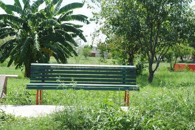 Invasión de mosquitos. En la colonia La Amistad, así es como luce actualmente su plaza, debido a que las lluvias favorecieron al crecimiento de la hierba, y con ello la proliferación de mosquitos.