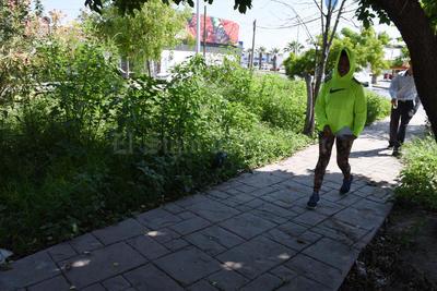 """Como selva. El camellón central de la calle Santa María de la colonia Las Misiones, se encuentra """"invadido"""" de hierba."""