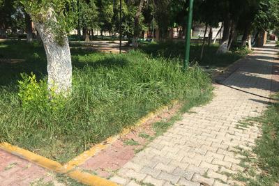 """Muy verde. En un """"paraíso"""" para los mosquitos, se convirtió la plaza de la colonia Nueva Los Ángeles debido a la hierba."""