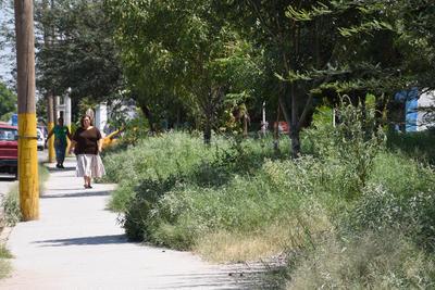 Escondida. Escondida entre la maleza, es como se encuentra la plaza de la colonia Nueva California, gracias a la lluvia y la falta de mantenimiento.