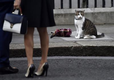 LONDRES (REINO UNIDO).- Larry, el gato de la residencia de Downing Street, sentado al lado de un bolso mientras los invitados acuden a la Semana de Moda de Londres, Reino Unido. En el evento también asistirá la primer ministra británica, Theresa May. EFE