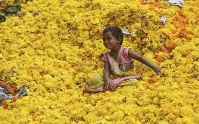 BOMBAY (INDIA).- Una niña juega sobre un montón de claveles de las indias en un campo de desperdicios para flores junto a un mercado de flores en la India. Los claveles de las indias se usan en muchas ceremonias religiosas en templos por todo el país. EFE