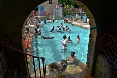 """MIAMI (ESTADOS UNIDOS).- Un grupo de personas se baña con sus mascotas en una piscina de Coral Gables (Estados Unidos). La """"Piscina Veneciana"""" (Venetian Pool), una de las joyas arquitectónicas de los años 20 que conserva Miami, celebró hoy su día anual de los perros, el único en el que las mascotas pueden refrescarse y divertirse en sus aguas turquesas. EFE"""