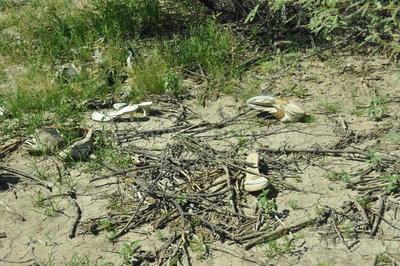 Hasta el momento no ha sido posible la identificación de los restos, ya que las 30 muestras de los 52 integrantes de Grupo Vida no han coincidido tampoco con los registros de Fuerzas Unidas por sus Desaparecidos en Coahuila (Fuundec).