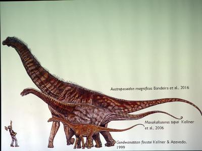 """RÍO DE JANEIRO (BRASIL).- Fueron presentadas en la ciudad de Río de Janeiro (Brasil) las vértebras del cuello y de la columna vertebral del dinosaurio """"Austroposeidon Magnificus"""". Con cerca de 25 metros de longitud, sería el más grande de Brasil y fue clasificado como Titanosaurio. EFE"""