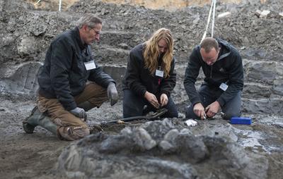 GRO PAMPAU (ALEMANIA).- Unos paleontólogos limpian partes del esqueleto fosilizado de un ballena de unos 11 millones de años de antigüedad después de que unos aficionados a la paleontología efectuaran el hallazgo, en una gravera en Gro Pampau, cerca de Hamburgo, Alemania. EFE