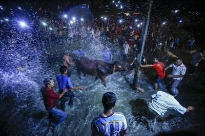 BHAKTAPUR (NEPAL).- Nepalíes lanzan agua sobre un búfalo borracho durante su sacrificio para la celebración del Nawami en honor a la diosa Durga durante la celebración del Festival Dashain en Bgaktapur (Nepal). El festival celebra la victoria del bien sobre el mal y honran a la diosa Durga, diosa del poder y la prosperidad, con el sacrificio de animales como cabras y búfalos. EFE