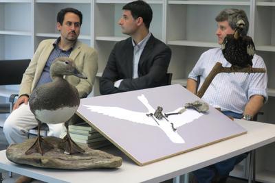BUENOS AIRES (ARGENTINA).- Los miembros del equipo investigador argentino presentan en Buenos Aires, Argentina, el fósil del aparato fonador de aves más antiguo conocido hasta el momento, que revela datos sobre la comunicación de estas especies, parientes de los patos actuales, y que descienden de los dinosaurios. EFE