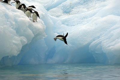 Sidney.- Imagen facilitada por WWF de pinguinos en la Antartida. La organización ecologista WWF pide crear una gran reserva marina protegida en la Antártida, al considerar que ayudará a mitigar los efectos del cambio climático y conservar la vida en ese continente. EFE