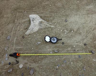 México, (Notimex-Especial).- Tras dos décadas de investigación en 10 yacimientos del estado de Nuevo León, la arqueóloga Araceli Rivera identificó un ritual de invierno de hace 8 mil años de antigüedad resultado de la interacción entre los primeros pobladores de México con animales extintos durante la Era de Hielo. NOTIMEX