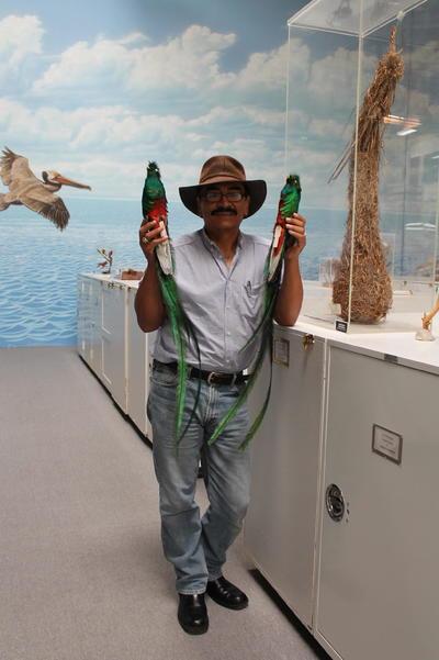 CAMARILLO (EE.UU.).- Fotografía cedida por Mimi Danwyk, muestra a René Corado, director de colecciones de WFVZ, con un ejemplar disecado de Quetzal Resplandeciente (Pharomachrus mocinno), durante la exposición de una colección de doce aves autóctonas de Guatemala, así como varios nidos y huevos. Los ríos de Guatemala ven disminuir cada vez más su población de aves producto de la contaminación ambiental, que avanza imparable y pone en riesgo de extinción muchas especies autóctonas, tal como se desprende de una muestra inaugurada en un museo aviar de California, en Camarillo, California (EE.UU.). EFE