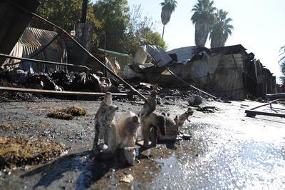 Un total de 44 familias fueron afectadas en su patrimonio, con sus ahorros de todo un año que habían invertido en la mercancía que ofrecen al público en el mercadito navideño de Gómez Palacio.