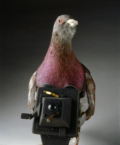 WASHINGTON (ESTADOS UNIDOS).- Fotografía facilitada por el Museo Internacional de Espías en Washington, Estados Unidos que muestra una paloma usada para tomar fotografías de la I Guerra Mundial. EFE