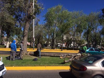 Autoridades retiran árbol caído para no afectar circulación.