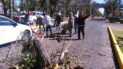 La caída de un árbol en un vehículo en bulevar Dolroes del Río y Belisario Domínguez que dejó solo daños materiales.