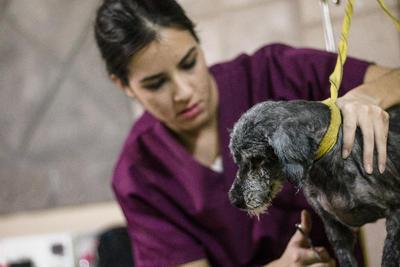 """Los perros la buscan y se ponen boca arriba para que su """"madre"""" les acaricie la panza. Sin embargo, también ha sido testigo de actos inhumanos y de crueldad hacia los animales."""