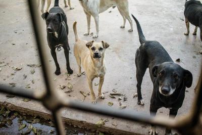 La primera vez que se dio cuenta de que tenía facilidad para colocar a un perro en un nuevo hogar fue cuando rescató a Paloma, una perrita callejera a la que cuidó, alimentó y dio en adopción a sus siete cachorros.