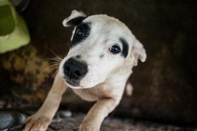 Además de los perros del albergue, Martha tiene a otros nueve en su casa. Dice que quien le inculcó su amor por los animales fue su padre debido a que siempre tenían en su casa a perros de la calle.