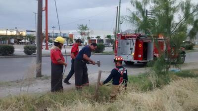 En otros sectores de la ciudad se reportó la descompostura de semáforos y la caída de árboles y ramas en distintos sectores, a los que acudió personal del Cuerpo de Bomberos.