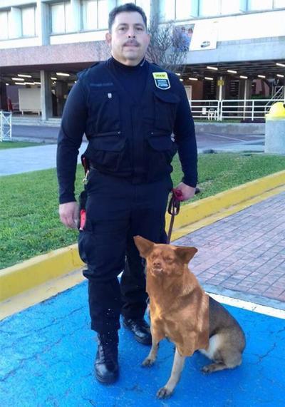 Chilaquil también es acechado por las firmas de seguridad. Es una garantía anti-robos, dicen por ahí...