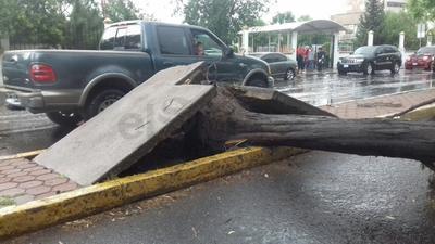 Imagen de la base del árbol que cayó sobre el auto a fuera de la Escuela Anexa a la Normal.