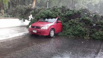 A las afueras de la Escuela Anexa a la Normal, las rachas de viento causaron la caída de un árbol sobre un automóvil.