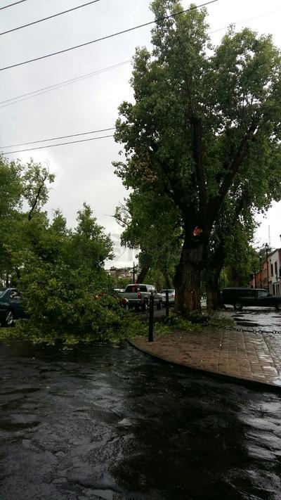 Un árbol cayó sobre la cinta asfaltica en la esquina que conforman el bulevar Dolores del Río y calle Independencia, sin lesionados.