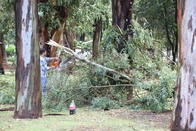Un gran peligro la caída de arboles en Durango alerto a la ciudadanía.
