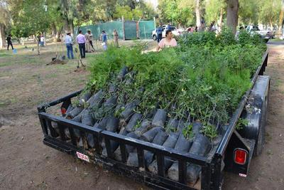La campaña incluye la donación de otros mil árboles pequeños y medianos de diferentes especies para los ciudadanos que acudan a canjear artículos reciclables.