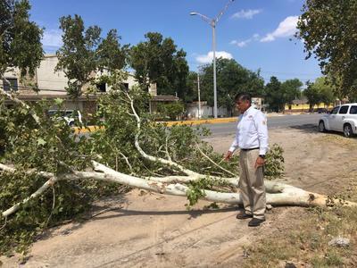 De igual manera, el fin de semana se registró en Acuña una tromba que dejó daños materiales, así como algunos árboles caídos.