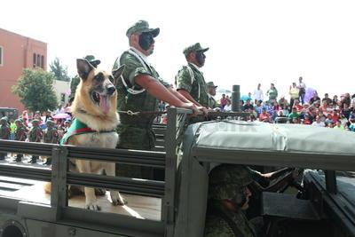 Agentes caninos también formaron parte del desfile militar.
