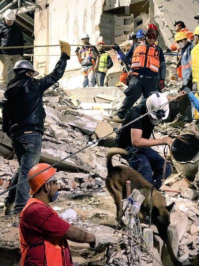 Al menos tres personas con vida y 13 cuerpos, son los que lograron localizar gracias a su entrenamiento adquirido dentro de la corporación.