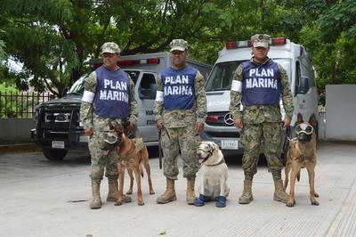 """""""Evil"""", """"Frida"""" y """"Eco"""" son los tres ejemplares caninos que forman parte del Equipo de Búsqueda y Rescate de la Secretaría de Marina-Armada de México."""