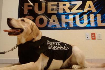 'Channel', miembro del grupo Fuerza Coahuila contribuyó a las labores de rescate en el sismo que sacudió la Ciudad de México.