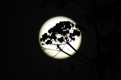 Diciembre es considerado como el mejor mes para observar fenómenos astronómicos debido a las bajas temperaturas.
