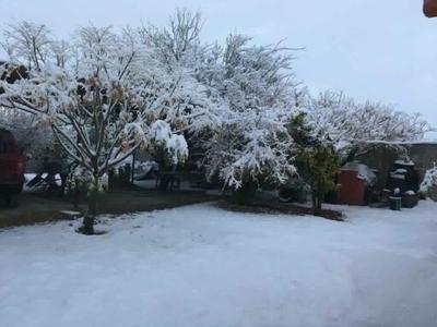 Árboles en Tlahualilo cubiertos por nieve.