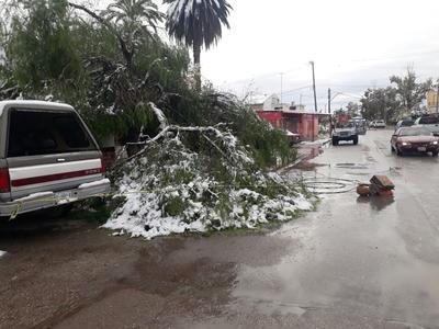 La nieve derribó árboles y dos domos en Tlahualilo.