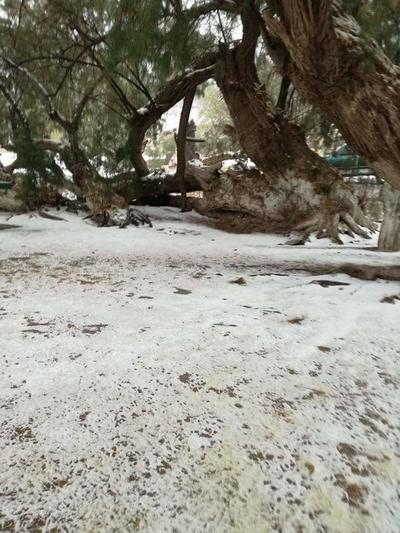 Usuarios del municipio de Viesca compartieron algunas fotografías de la nevada de este viernes.