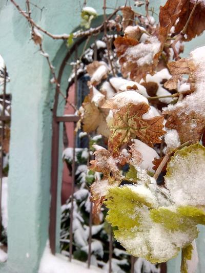 Bellas postales se hicieron presentes en las redes sociales debido a la nevada que se registró en Torreón.