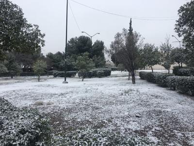 Los parques y jardines de la ciudad de Saltillo se cubrieron de hielo.
