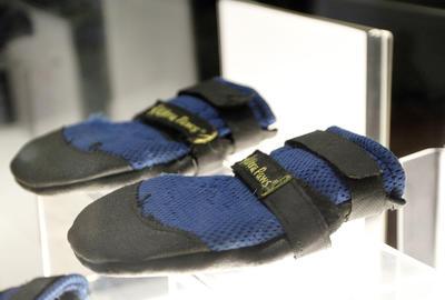 """""""Son las primeras botas de calzado no humano que albergamos en nuestro museo"""", comentó la presidenta del museo."""