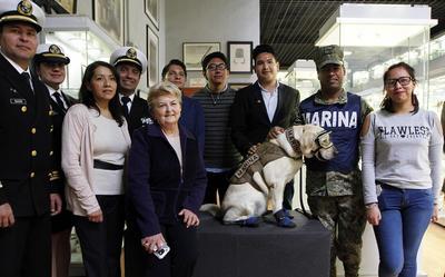 Teresa Villamayor Ballina, presidenta del museo, señaló que son los primeros ejemplares de un animal en el recinto.