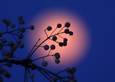 Vista de la superluna en el cielo de Nicosia (Chipre).