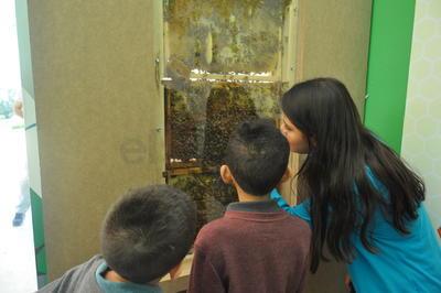 Chicos y grandes tendrán la oportunidad de conocer la vida de las abejas.