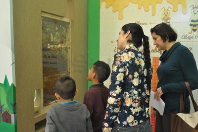 El Planetarium Torreón inauguró un apiario o gran colmena en la Bioterraza.