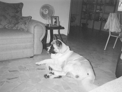 """18032018 Perro """"Totoy"""", hace varios años"""
